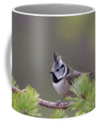 Crested Tit Pine Coffee Mug