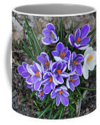 Crocus 6675 Coffee Mug