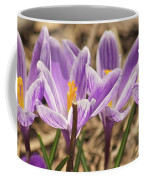Crocuses 2 Coffee Mug