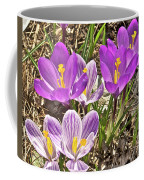 Crocuses 4 Coffee Mug