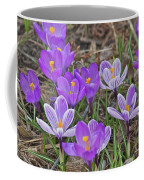 Crocuses 5 Coffee Mug