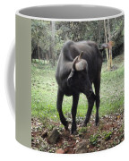 Curious Buffalo Coffee Mug