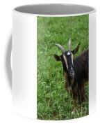 Curious Goat With Very Long Shaggy Fur Coffee Mug
