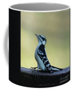Curious Hairy Woodpecker Coffee Mug