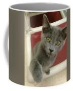 Curious Kitten Coffee Mug