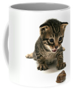 Curious  Kitten Coffee Mug