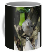 Curious Mockingbird Coffee Mug