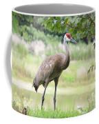 Curious Sandhill Crane Coffee Mug