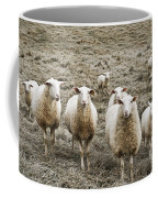Curious Sheep Coffee Mug