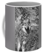 Curious Wolf Pup Coffee Mug