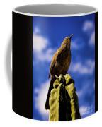 Curved Billed Thrasher Coffee Mug