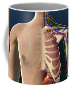 Cutaway View Of Male Chest Showing Lung Coffee Mug