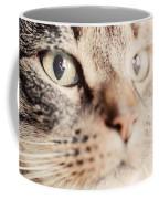 Cute Cat Close-up Portrait Coffee Mug