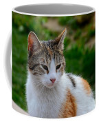 Cute Grey White And Orange Cat Poses And Gazes Coffee Mug