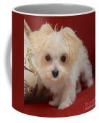 Cute Maltipoo Coffee Mug