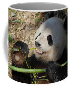 Cute Panda Bear With Very Sharp Teeth Eating Bamboo Coffee Mug