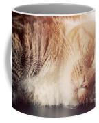 Cute Small Cat Sleeping Coffee Mug