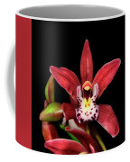 Cymbidium Orchid 001 Coffee Mug