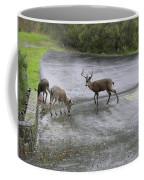 D-a0033 Mule Deer Coffee Mug