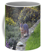 D-a0037 Gray Fox On Our Property Coffee Mug