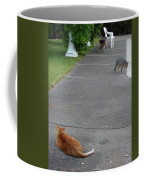 D-a0050-dc Gray Fox And Our Cat On Our Pool Deck Coffee Mug