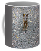 D-a0051-dc Gray Fox Pup Coffee Mug