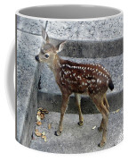 D-a0069 Mule Deer Fawn On Our Property On Sonoma Mountain Coffee Mug