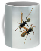 D2b6337 Wasps On Sonoma Mountain Coffee Mug