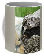 D7b6336 Blue Belly Lizard Coffee Mug