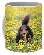 Dachshund On A Meadow In Bloom Coffee Mug