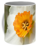 Daffodil Narcissus Flower Coffee Mug
