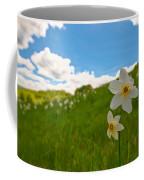 Daffodils Blossimg At Cavalla Plains 2017 Iv - Fioritura Dei Narcisi Al Pian Della Cavalla 2017 Coffee Mug