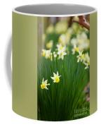 Daffodils In A Bunch Coffee Mug