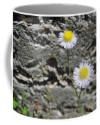 Daisy Fleabane Flowers Coffee Mug