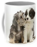 Dandy Dinmont Terrier And Border Collie Coffee Mug