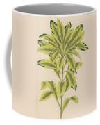 Daphne Mazereon Variegata Coffee Mug