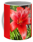 Dark Orange Red Lily Coffee Mug