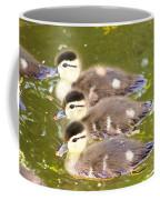 Darling Ducklings  Coffee Mug