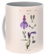 Darwins Orchis Pyramidalis, Illustration Coffee Mug