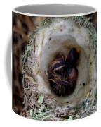 161549 Day Old Hummingbird Babies Coffee Mug