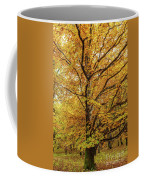 Deciduous Forest In The Autumn Coffee Mug