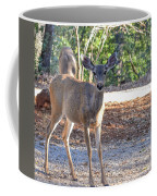 Deer Doe - 1 Coffee Mug