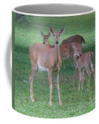 Deer Family Out For Evening Stroll Coffee Mug