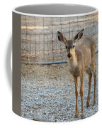 Deer Fawn - 1 Coffee Mug