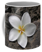 Delicate Induration Coffee Mug