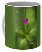 Deptford Pink Dianthus Flower Coffee Mug