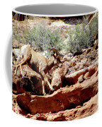 Desert Bighorn Ram Walking The Ledge Coffee Mug