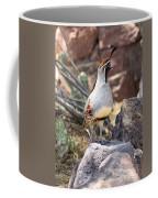 Desert Quail Coffee Mug