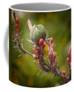 Desert Seed Pod 2 Coffee Mug