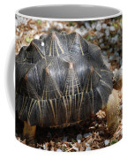 Desert Turtle With An Unusual Shell In The Wild Coffee Mug